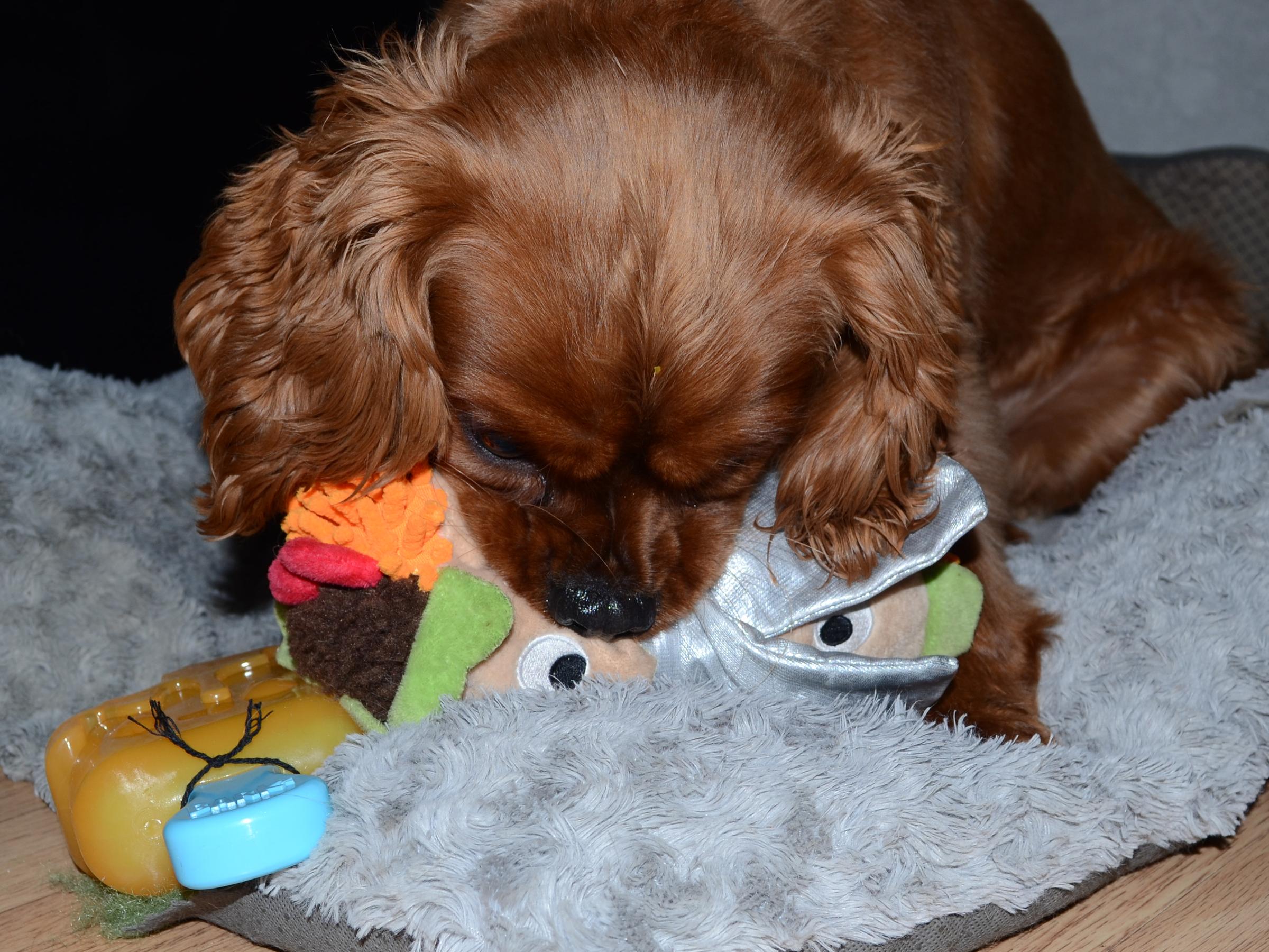Archie Bark Box 2